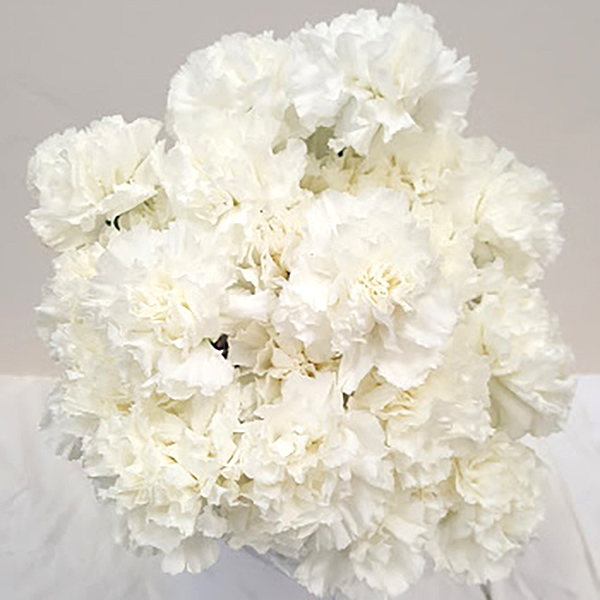 White Carnation Grower Bunches