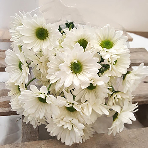 White Daisy Poms Grower Bunches