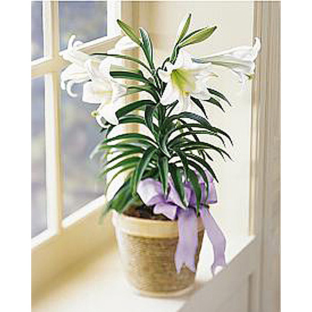 WW-161 Easter Lily