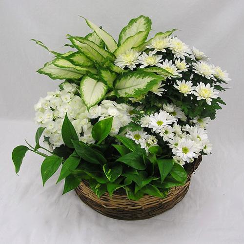 WW-332 All White Plant Basket