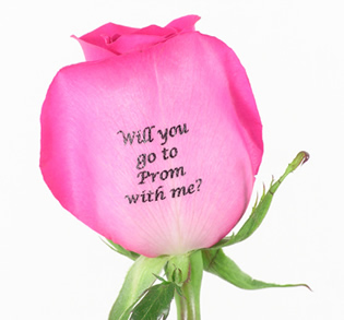 will_you_rose