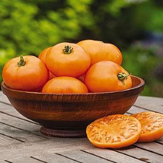 orange wellington tomato